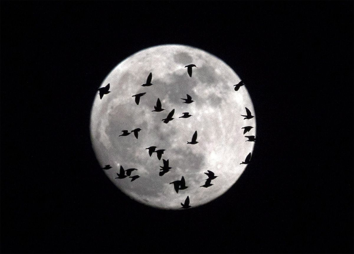 Róma, 2018. január 31. Madarak repülnek a Hold előtt Rómában 2018. január 31-én, amikor délután egyszerre észlelhető a szuperhold, a  kék hold és a teljes holdfogyatkozás. (MTI/EPA/Massimo Percossi)
