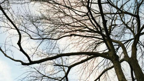 Low angle view of sky through tree branches with no leaves