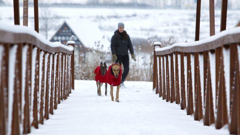 Nagykanizsa, 2018. január 15. Magyar agarakat sétáltat egy nõ a nagykanizsai csónakázótó behavazott parkjában 2018. január 15-én. MTI Fotó: Varga György