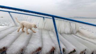 Fonyód, 2018. február 26.Eb sétál a jégcsapokkal borított lépcsőn a fonyódi Balaton-parti kutyás strandon 2018. február 26-án.MTI Fotó: Varga György