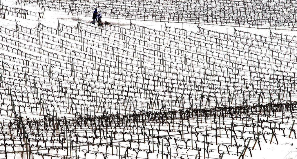 Logrono, 2018. február 28.Hó borította szőlőskert a spanyolországi Logronóban 2018. február 28-án. A szokatlan hideg, a havazás és a szélviharok sok helyen okoznak közlekedési nehézséget Spanyolországban. (MTI/EPA/Raquel Manzanares)