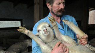 Hortobágy, 2018. március 14.Dobó István juhász egy báránnyal. A hortobágyi Kathi Farm Kft.-ből elszállították az első adag, 250 darab magyar fésűs merinó húsvéti bárányt. A társaság egy juh export vállalkozás segítségével Olaszországban értékesíti a 25-27 kilós bárányokat.MTVA/Bizományosi: Oláh Tibor ***************************Kedves Felhasználó!Ez a fotó nem a Duna Médiaszolgáltató Zrt./MTI által készített és kiadott fényképfelvétel, így harmadik személy által támasztott bárminemű – különösen szerzői jogi, szomszédos jogi és személyiségi jogi – igényért a fotó készítője közvetlenül maga áll helyt, az MTVA felelőssége e körben kizárt.