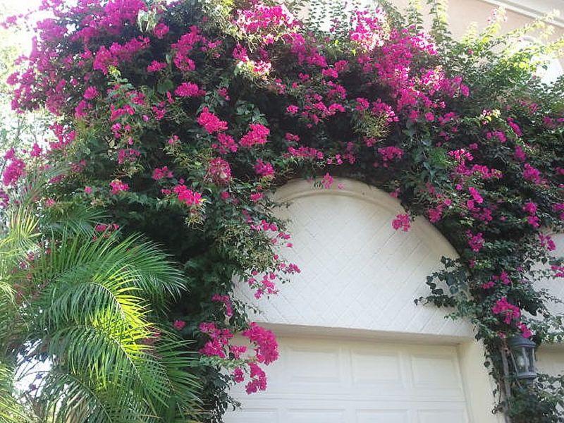 A Romantikus Kert 233 S Balkon Titka A Murvaf 252 Rt 24 Hu