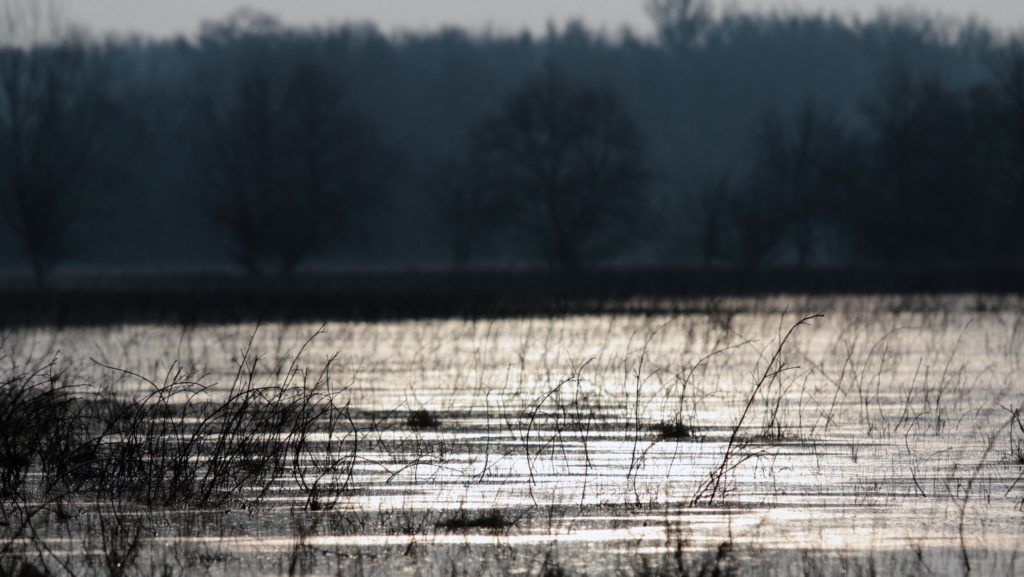 Tiszasüly, 2017. december 19.  Az áradó Tisza által elöntött legelõ Tiszasüly határában 2017. december 19-én. MTI Fotó: Mészáros János