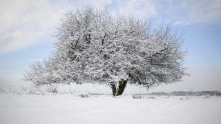 Salgótarján, 2018. február 4. Havas fa a Medves-fennsíkon Salgótarján közelében 2018. február 4-én. MTI Fotó: Komka Péter