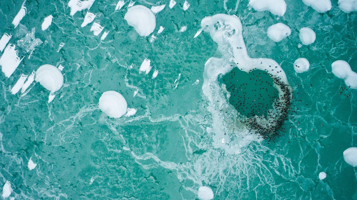 Szántód, 2018. február 28.Madarak a jeges Balatonban Szántódnál 2018. február 28-án.MTI Fotó: Jánossy Gergely