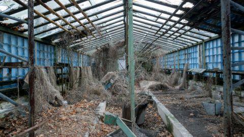 Abandoned greenhouse in Pripyat, Ukraine