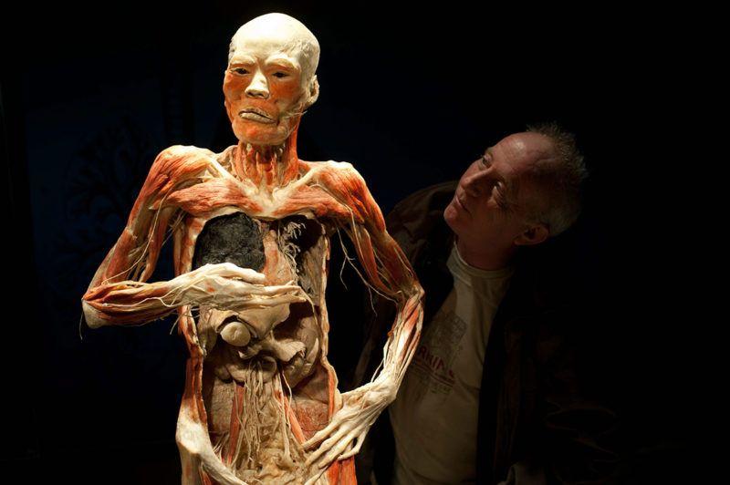 Budapest, 2012. április 2.Érdeklődő néz egy preparált testet a Bodies Revealed (Feltárt testek) elnevezésű tárlaton a VAM Design Centerben, ahol 1700 m2-en, 9 teremben, kilenc furgonnal érkezett 15 testet és több mint 200 testrészt, egészséges és beteg szervet nézhetnek meg a látogatók. A Bodies2 kiállítás az ismeretterjesztésre és az oktatásra helyezte a hangsúlyt, arra világít rá, hogy az egészségtelen életmódnak milyen következményei vannak az emberi testben.MTI Fotó: Kallos Bea