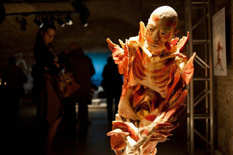 Budapest, 2012. április 2.Egy preparátum a Bodies Revealed (Feltárt testek) elnevezésű tárlaton a VAM Design Centerben, ahol 1700 m2-en, 9 teremben, kilenc furgonnal érkezett 15 testet és több mint 200 testrészt, egészséges és beteg szervet nézhetnek meg a látogatók. A Bodies2 kiállítás az ismeretterjesztésre és az oktatásra helyezte a hangsúlyt, arra világít rá, hogy az egészségtelen életmódnak milyen következményei vannak az emberi testben.MTI Fotó: Kallos Bea