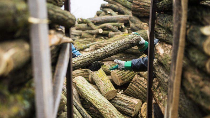 Hodász, 2015. január 15. Közmunkások pakolják a rászorulóknak szánt tûzifát a Szabolcs-Szatmár-Bereg megyei Hodászon 2015. január 15-én. A településen a szociális tûzifaprogram keretében tizenhárom és fél millió forint értékû fát osztanak ki mintegy hétszáz családnak. MTI Fotó: Balázs Attila