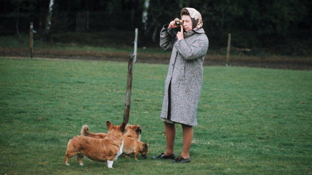 WINDSOR:  Queen Elizabeth II in Windsor Park photographing her corgis in 1960, in England. (Photo by Anwar Hussein/Getty Images)
