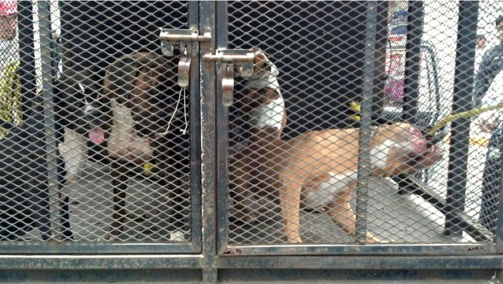 30807124. México, D.F.- La Procuraduría General de Justicia del Distrito Federal (PGJDF) investiga el homicidio de un pequeño de año ocho meses de edad que la víspera fue atacado por un perro de raza pitbull y tres hembras boxers en la colonia Selene, delegación Tláhuac. NOTIMEX/FOTO/ESPECIAL/COR/HUM/
