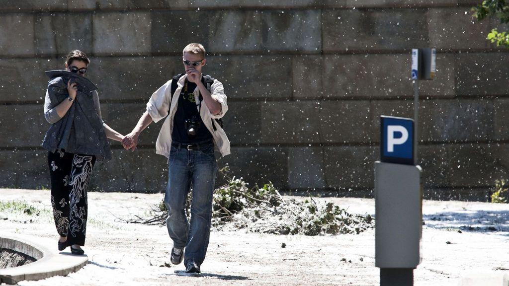 Budapest, 2010. május 23.Nyárfa pihés termése száll a Lánchíd budai hídfőjénél. Megkezdődött a nyárfák virágzása. A közhiedelemmel ellentétben a nyárfa pollen alig okoz allergiás panaszokat; a május-júniusban megjelenő magszőrök mechanikailag ingerlik a nyálkahártyát, az allergiás tüneteket a hozzájuk tapadó erősen allergén fűpollenek válthatják ki.MTI Fotó: Szigetváry Zsolt
