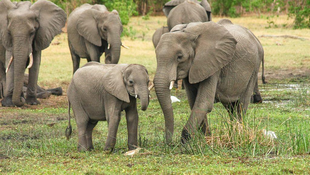 Kenya halálbüntetéssel sújtaná az orvvadászokat
