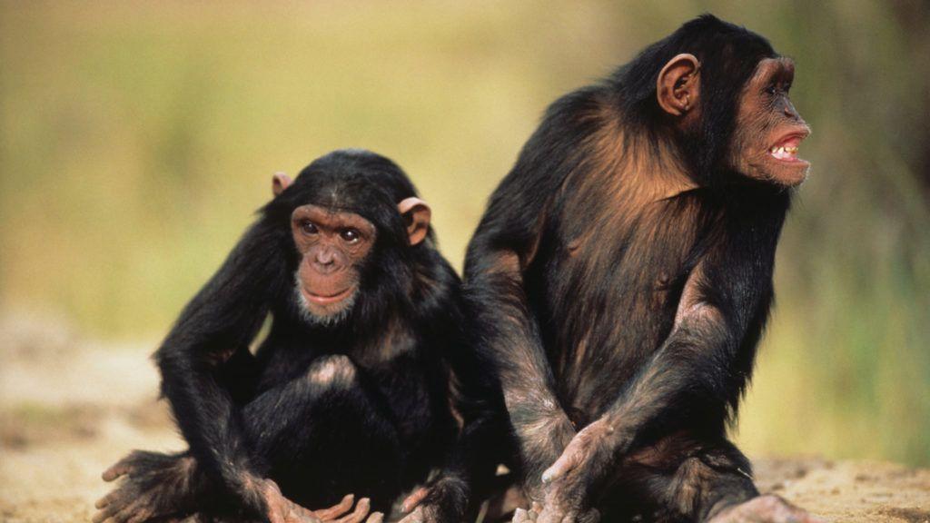 Sweetwaters Chimpanzee Sanctuary
