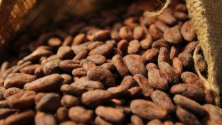 A low angle shot of high quality cocoa beans spilling out of a burlap bag.