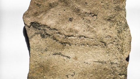 (180607) -- NANJING, June 7, 2018 (Xinhua) -- Photo taken on June 6, 2018 shows the animal fossil footprints, which were made in the Ediacaran Period, at the Nanjing Institute of Geology and Palaeontology under the Chinese Academy of Sciences in east China's Jiangsu Province. Chinese and American paleontologists reported in the journal Science Advances the discovery of earliest animal fossil footprint ever found.  (Xinhua/Li Bo)(mcg)