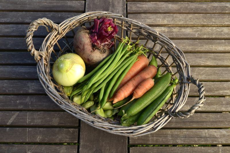 POTAGER DE SUZANNE  Harvest of vegetables on a garden table.    Biosphoto / Joël Douillet