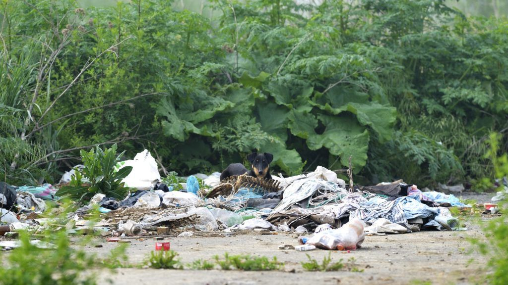 Dog eating in a dumpsite Serbia.  Biosphoto / Grégory Mairet