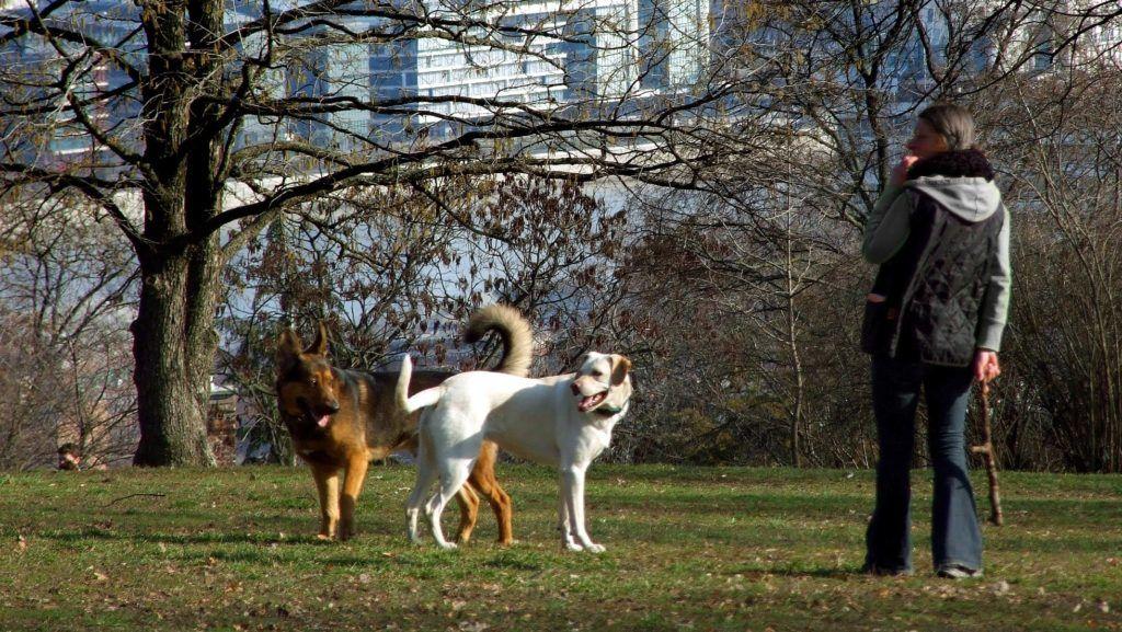 Budapest, 2013. március 3. Kutyáit futtatja egy fiatal lány a Gellért-hegy déli oldalában. MTVA/Bizományosi: Jászai Csaba  *************************** Kedves Felhasználó! Az Ön által most kiválasztott fénykép nem képezi az MTI fotókiadásának, valamint az MTVA fotóarchívumának szerves részét. A kép tartalmáért és a szövegért a fotó készítõje vállalja a felelõsséget.