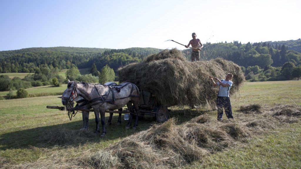 Csíkszentmárton, 2013. augusztus 7. Szénát gyûjtõ emberek Csíkszentmárton közelében 2013. augusztus 7-én. MTI Fotó: Varga György