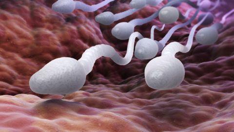 Male sperm cells. 3D illustration