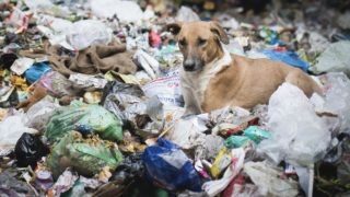 Dogs in garbage dumping grounds trash garbage in India