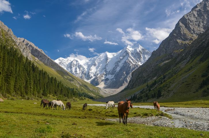 Horses on the background of beautiful mountains.