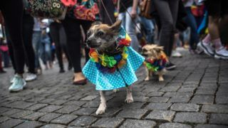Prága, 2017. augusztus 12. A leszbikusok, melegek, biszexuálisok és transzszexuálisok (LGBT) közösségét jelképezõ szivárvány színû füzér egy öleben a 7. alkalommal rendezett Prague Pride melegfelvonuláson a cseh fõvárosban 2017. augusztus 12-én. Idén mintegy 15 ezren vettek részt a szexuális kisebbségek hetét lezáró prágai parádén. (MTI/EPA/Martin Divisek)