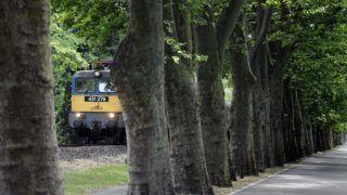 Balatonföldvár, 2015. június 17. Egy V43-as mozdony halad a balatonföldvári védett platánsor alatt 2015. június 16-án. A napokban adták át a Lepsény és Szántód-Kõröshegy közötti korszerûsített vasúti vonalszakaszt. MTI Fotó: Máthé Zoltán