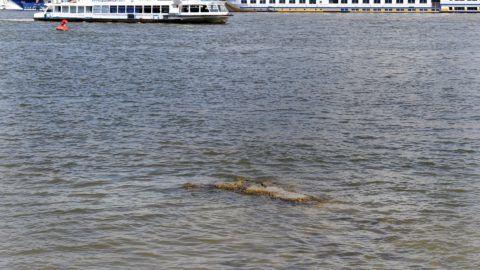 Alacsony a vízállás a Duna budapesti szakaszán