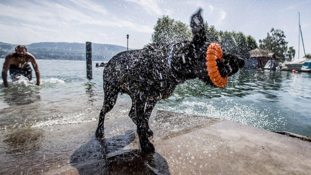 Zürich, 2017. augusztus 4. A vizet rázza bundájából egy kutya a Zürichi-tóból kihozott játékkal pofájában a nyári kánikulában 2017. augusztus 3-án. (MTI/EPA/Christian Merz)