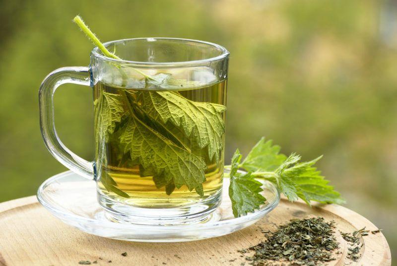 Nettle tea in glass. Fresh and dry nettle.