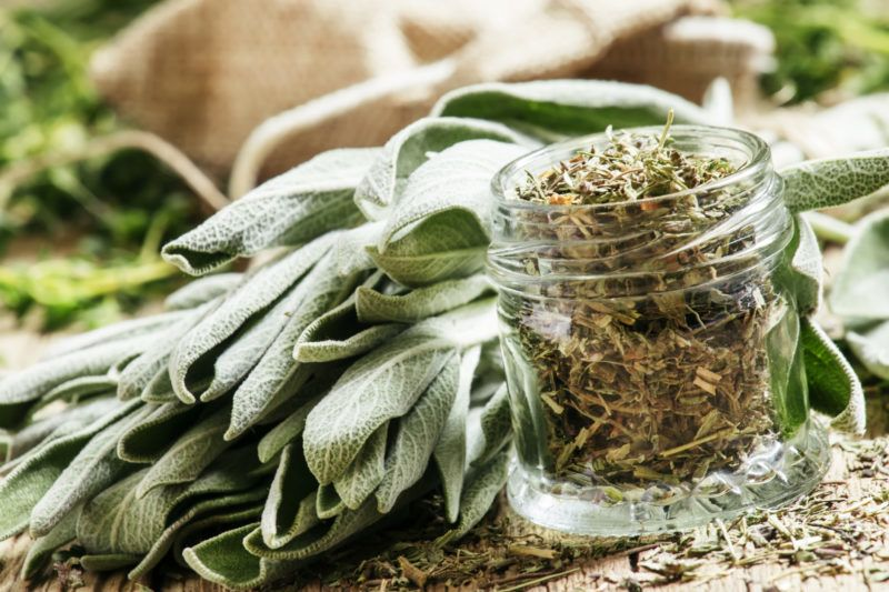 Dried sage in a glass jar, fresh sage on the vintage wooden table, preparation of medicinal herbs drying, selective focus