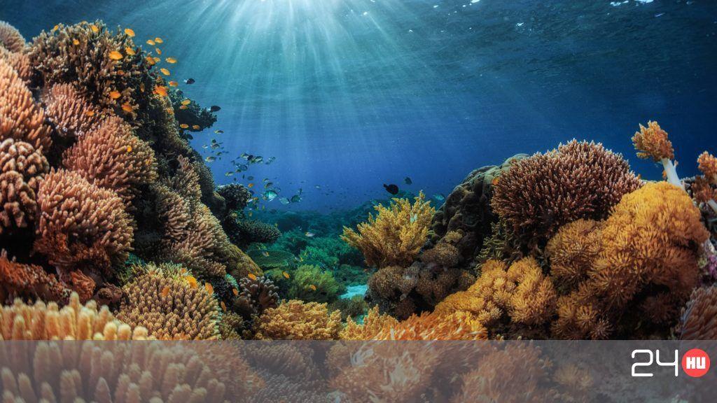 Túlélhetik a korallok a klímaváltozást