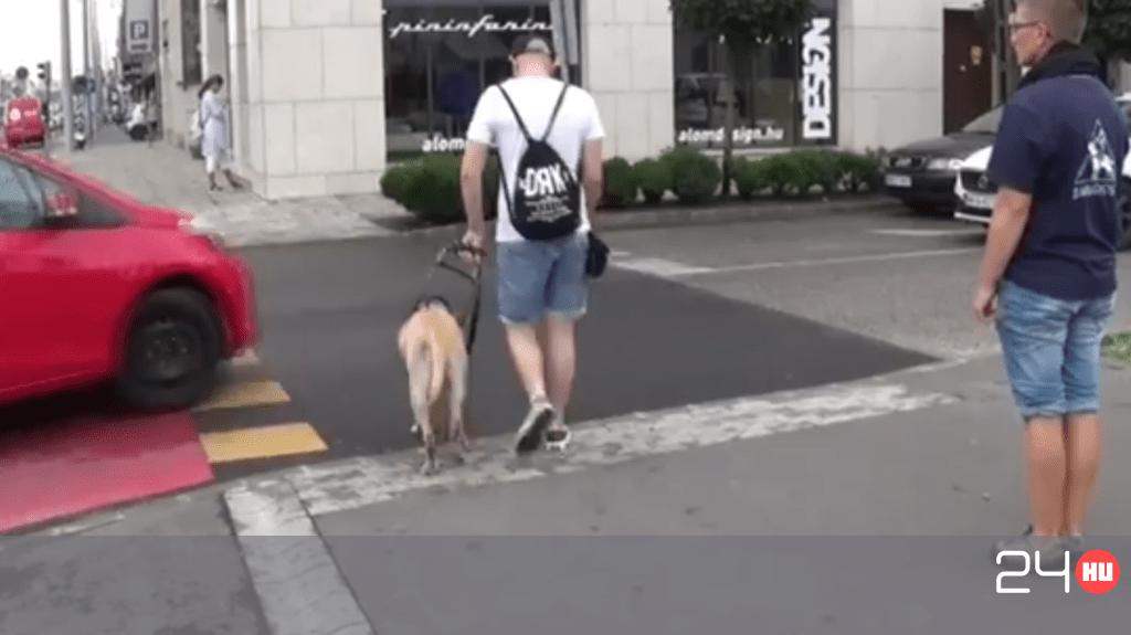 Majdnem elgázolták a vakvezető kutyát és gazdáját Budapesten