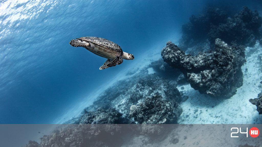 A tengeri teknősök több mint fele eszik műanyagot, pedig akár egy darab is megölheti őket