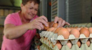 Földes, 2018. június 4. Joó Mária baromfigondozó elõválogatást végez. A Földesi Rákóczi Mezõgazdasági Kft. baromfi ágazatában évente 44 millió darab tojást állítanak elõ, amelynek 50 százalékát áruházláncokban, a fennmaradó hányadot pedig piacokon, boltokban és cukrászdák számára értékesítik S, M, L, XL méret szerint válogatva. MTVA/Bizományosi: Oláh Tibor  *************************** Kedves Felhasználó! Ez a fotó nem a Duna Médiaszolgáltató Zrt./MTI által készített és kiadott fényképfelvétel, így harmadik személy által támasztott bárminemû – különösen szerzõi jogi, szomszédos jogi és személyiségi jogi – igényért a fotó készítõje közvetlenül maga áll helyt, az MTVA felelõssége e körben kizárt.