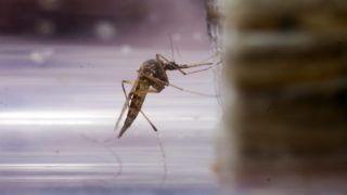 Balatonmáriafürdõ, 2011. július 27. Egy biológus elkábított szúnyogokat vizsgál egy üvegcsõben Balatonmáriafürdõ és az M7-es autópálya közötti területen. A szakember a Balatoni Szövetség megbízásából végzi a szúnyogtenyészõ hely ellenõrzését. A nyár elsõ felében uralkodó száraz, csapadékmentes és nagyon meleg idõjárás miatt jelenleg kevesebb szúnyog van a vízpartokon, valamint a lápos és mocsaras területeken, ezért irtani sem kellett annyit, mint a korábbi években. MTI Fotó: Varga György
