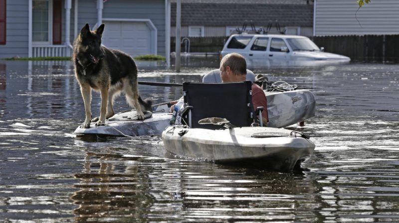 Lumberton, 2018. szeptember 17. A kutyáját menti egy férfi a Florence hurrikán elõidézte árvízbõl az észak-karolinai Lumbertonban 2018. szeptember 17-én. (MTI/AP/Gerry Broome)