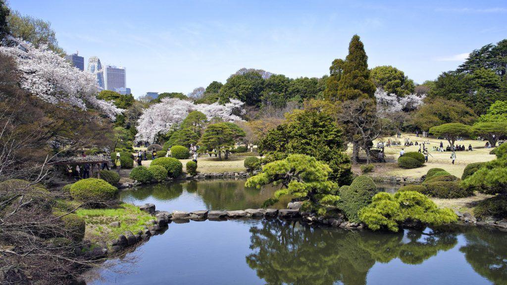 Japan, Honshu island, Kanto, Tokyo, Shinjuku Gyoen gardens during springtime