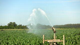 Tiszavasvári, 2017. augusztus 4. Kukoricaültetvény öntözése Tiszavasvári határában. Hazánk kontinentális éghajlata a kukorica vegetációs idõszakában ritkán biztosítja a szántóföldi növény vízigényét, ezért 2-6 alkalommal ajánlott az öntözése. A kiszórt vízmennyiség 30-40 milliméternyire ajánlott, mert annak hatásaként hektáronként 2-3 tonna többlettermés várható.  MTVA/Bizományosi: Oláh Tibor  *************************** Kedves Felhasználó! Ez a fotó nem a Duna Médiaszolgáltató Zrt./MTI által készített és kiadott fényképfelvétel, így harmadik személy által támasztott bárminemû – különösen szerzõi jogi, szomszédos jogi és személyiségi jogi – igényért a fotó készítõje közvetlenül maga áll helyt, az MTVA felelõssége e körben kizárt.