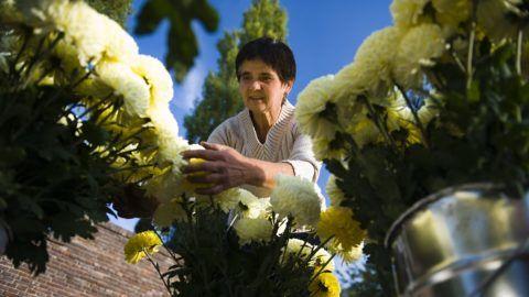 Nyíregyháza, 2011. október 27. Nagy Pálné virágárus rendezgeti áruját Nyíregyházán, az Északi Temetõben 2011. október 27-én. MTI Fotó: Balázs Attila