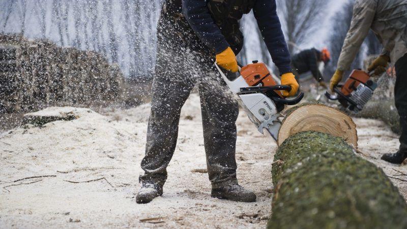 Pusztadobos, 2012. január 18. Favágók darabolnak egy kivágott fát egy nyárfaerdõ szélén a Szabolcs-Szatmár-Bereg megyei Pusztadobos határában. Az ipari nyárfa ára a feldolgozó üzemek számának csökkenése miatt a 2009-es válság óta közel harmadával csökkent.  MTI Fotó: Balázs Attila