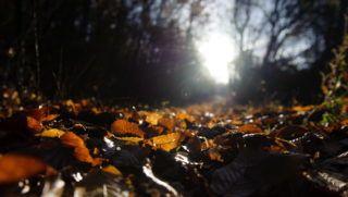 Salgótarján, 2012. november 10. Lehullott levelek a Karancs hegységben, Salgótarján közelében 2012. november 10-én. MTI Fotó: Komka Péter