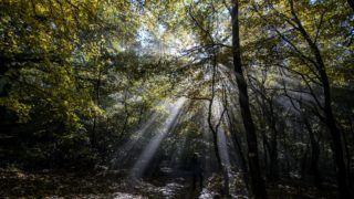 Salgótarján, 2016. október 22. Ködön átszûrõdõ napsütés egy Salgótarján környéki erdõben 2016. október 22-én. MTI Fotó: Komka Péter