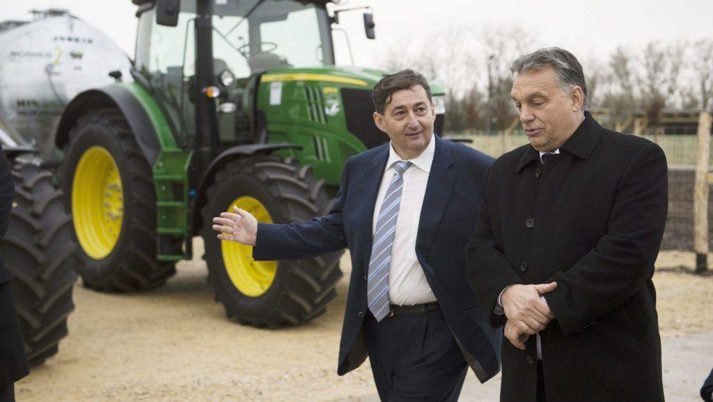 Alcsútdoboz, 2014. november 18. Orbán Viktor miniszterelnök (j) és Mészáros Lőrinc (Fidesz-KDNP) felcsúti polgármester a Búzakalász 66 Felcsút Kft. bányavölgyi mangalicatelepének avatásán a Fejér megyei Alcsútdobozon 2014. november 18-án. MTI Fotó: Koszticsák Szilárd