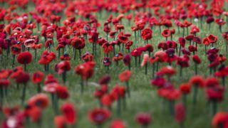 Canberra, 2018. október 24. Horgolt pipacsvirágok az ausztrál nemzeti háborús emlékközpont szoborkertjében, Canberrában 2018. október 24-én. Az elsõ világháborút lezáró fegyverletétel közelgõ századik évfordulója alkalmából idén 62 ezer pipacsot helyeztek el a kertben a harcok azonos számú ausztrál áldozata emlékére. A brit fennhatóságú országokban a pipacs a háborús halottak emléke elõtti tisztelgés jelképe. MTI/EPA/AAP/Lukas Coch