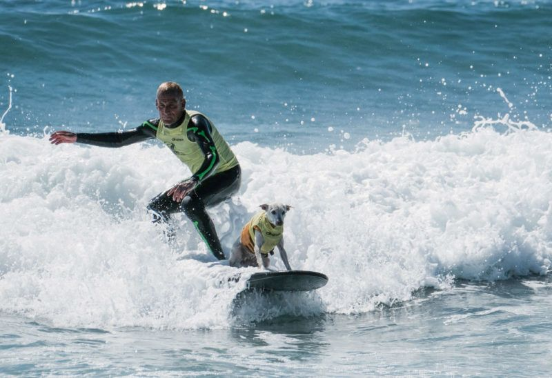 HUNTINGTON BEACH, CA - SEPTEMBER 29:  Surf dog Sugar and surfer Ryan Rustan catch a wave at the 10th annual Surf City Surf Dog contest on September 29, 2018 in Huntington Beach, California.  (Photo by Sarah Morris/Getty Images)