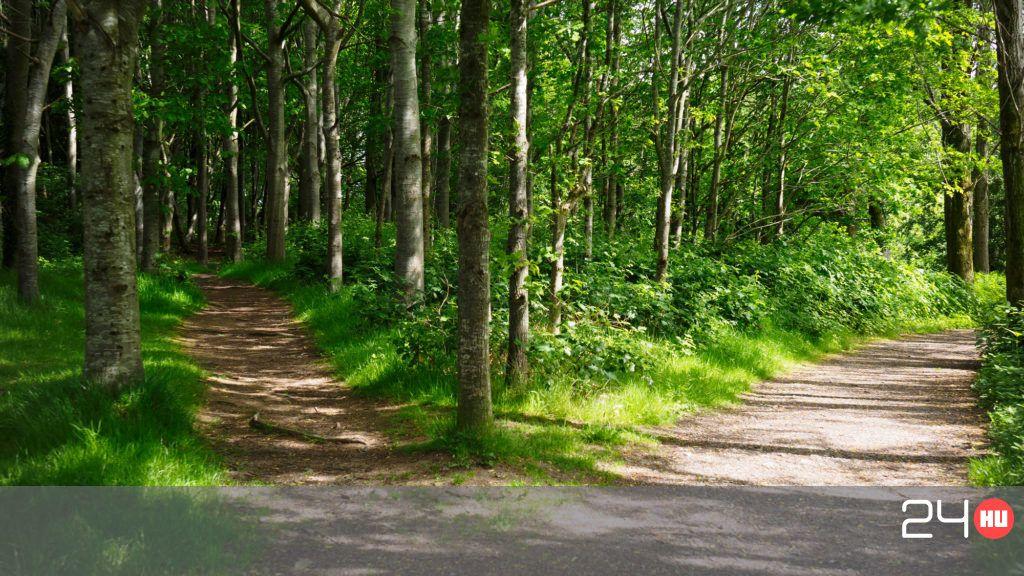 Összekapott a barátnőjével a 16 éves fiú, másnap a közeli erdőben találták meg a holttestét
